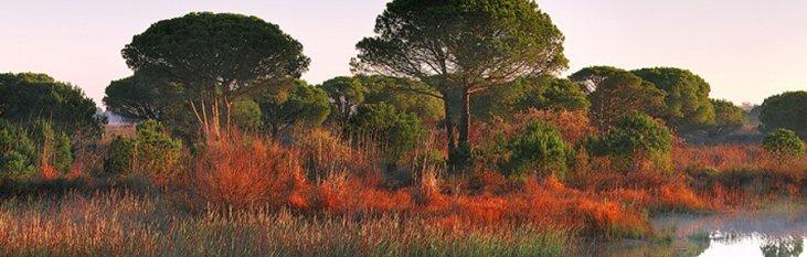 parque nacional de donana, spanje, park