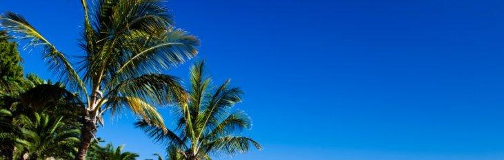 klimaat, weer, palmbomen