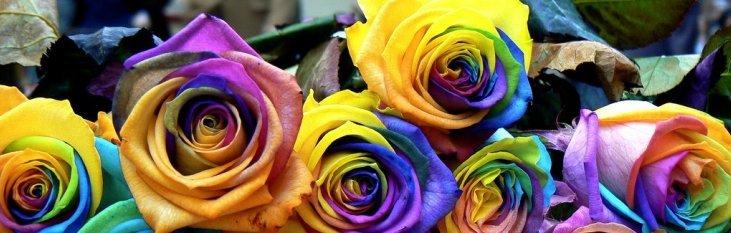 rozen, bloemen