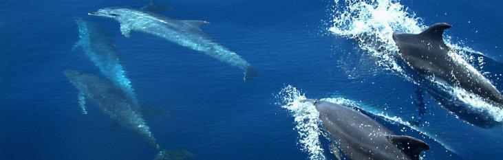 dolfijnen, tarifa