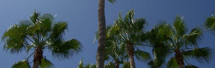 palmbomen, tenerife, weer